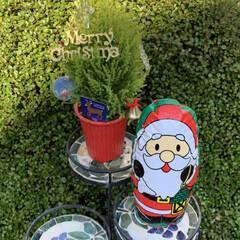 キャンドゥ/セリア/クリスマス/クリスマスツリー お外に、飾りました❤️(2枚目)