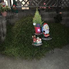 キャンドゥ/セリア/クリスマス/クリスマスツリー お外に、飾りました❤️(1枚目)