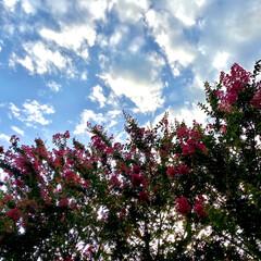 夕方の/空と/ピンクの/さるすべり/明日も/暑そぅ~~💦 とぅとぅ梅雨が明けました🌈  さぁ~て …