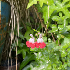 はな花/横に並んで/お行儀よく/暮らし おはようございます‼︎  アイビーの森を…
