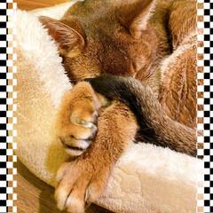 猫🐱/ヒーターの前は/快適にゃん 夕方になるとグッと寒くなりますね~🍂 ヒ…