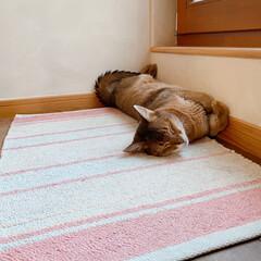 夕方/いつもの場所/何度寝? 腕を組んで寝てる猫。  〝お客さ~ん、終…