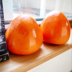 11月/まだ/寒くならないで~~~💦 おっきな富士柿…2つもらいました。 父曰…