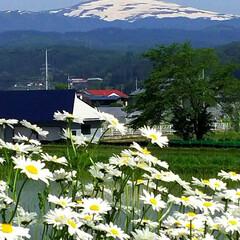 頑張ろう/月山/祖母の家の景色/コロナに負けない 祖母の家の裏庭からの景色✨今年も見れるの…