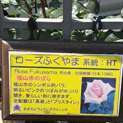 薔薇/昨日/病院の近くで/👀📷✨ おはようございます☺  4月28日(火)…(2枚目)