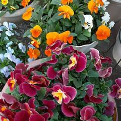 先日/通るの楽しみ/まるで、花屋敷❣️/お花でイッパイのお宅/ホームセンターからの帰り/👀📷✨ おはようございます☺  12月16日(水…
