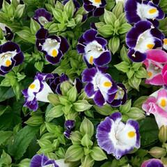 買い物帰り/暮らし 蒸し暑さ、飛んで行けー❗  白と紫の爽や…(1枚目)