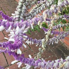 買い物に行く途中/出会った ちょっと変わった花を  👀📷✨しました🎵…