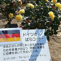 薔薇公園/👀📷✨/薔薇 おはようございます☺  11月17日(火…