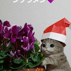 マイケルに/折り紙の/サンタの帽子/被せてみました おはようございます☺  12月10日(木…