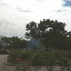 昨日/👀📷✨/もうすぐ秋の薔薇展/福山市/薔薇公園 🌹秋の薔薇展が10/24・25 日に  …(5枚目)