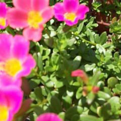 外出先で👀📷✨/季節の花/花 おはようございます☺  9月8日(火) …(2枚目)
