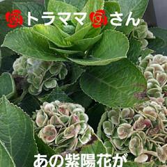 10月9日/👀📷✨/紫陽花が/色づいた おはようございます☺  10月27日(火…