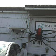 不思議なオブジェ/買い物帰り/👀📷✨/建物に/巨大な蜘蛛 買い物の帰り  建物に黒い巨大な蜘蛛が …