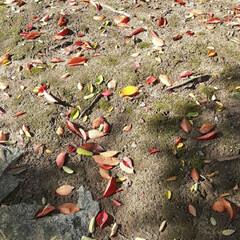 緑町公園/👀📷✨ 紅葉や、落ち葉さえ、絵になるようで  綺…(5枚目)