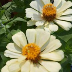 季節の花/花 買い物帰りに👀📷✨しました🎵