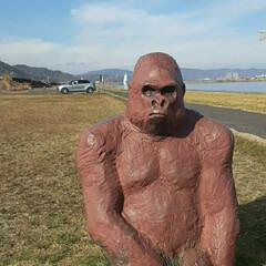 芦田川にて/👀📷✨ ①河原でゴリラに遭遇⁉️👀  ②自分の陰…
