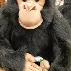 リアル/ぬいぐるみ/チンパンジー/雑貨 親戚の子の、誕生日プレゼントを選びに  …