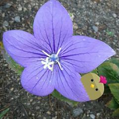 買い物に行く途中/👀📷✨/季節の花/花 おはようございます☺  10月9日(金)…