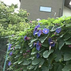 「おはよう  ございます☺  7月9日(水…」(2枚目)