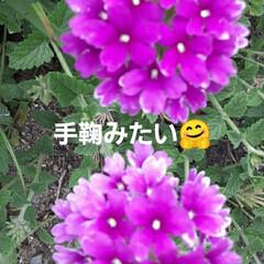 先日/買い物帰りに/咲いていました おっはよう ございま~す(#^.^#) …(1枚目)