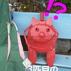 昨日/👀📷✨/福山の海の近く/いいぽんさん、有り難うございます いいぽんさんから、情報を頂きました  韓…(4枚目)