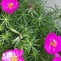 季節の花/花 先日、近所で👀📷✨しました🎵