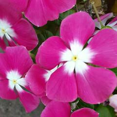 季節の花/花 買い物に行く途中に👀📷✨しました🎵