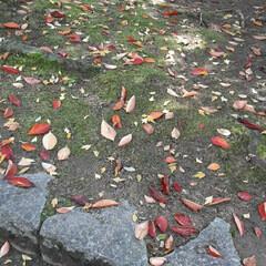 緑町公園/👀📷✨ 紅葉や、落ち葉さえ、絵になるようで  綺…