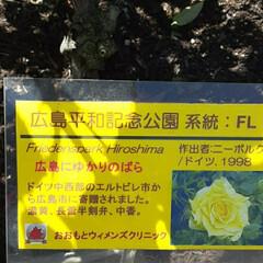 先日/出先で/👀📷✨ おはようございます☺  5月4日(火) …(3枚目)