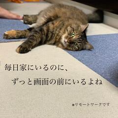 保護猫/ペット/猫 久々の投稿。ずっとお天気悪い。(2枚目)