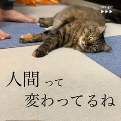 保護猫/ペット/猫 久々の投稿。ずっとお天気悪い。(1枚目)