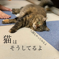 保護猫/ペット/猫 久々の投稿。ずっとお天気悪い。(4枚目)
