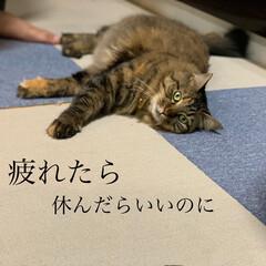 保護猫/ペット/猫 久々の投稿。ずっとお天気悪い。(3枚目)