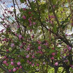 春 今日、通院の帰り🚲  花がとても美しくて…(1枚目)