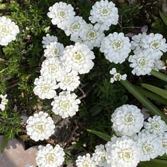 心配無い生活/コロナウィルス/可愛い花達❤️ 通院の帰りに🚲❤️  かわい子ちやん❤️…