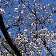 春 今日、通院の帰り🚲  花がとても美しくて…(7枚目)