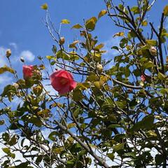 春 今日、通院の帰り🚲  花がとても美しくて…(5枚目)