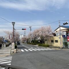 通院/桜🌸 通院の帰り🚲  桜が🌸とても綺麗🌸  今…(9枚目)