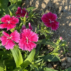 体力回復/可愛いお花達🌼/コンビニ コンビニまで歩いて用足し❤️  体力回復…