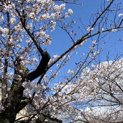 春 今日、通院の帰り🚲  花がとても美しくて…(8枚目)