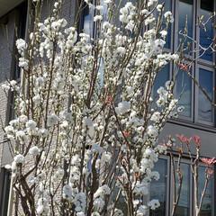 春 今日、通院の帰り🚲  花がとても美しくて…(4枚目)