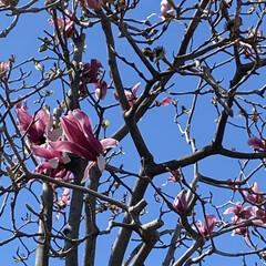 春 今日、通院の帰り🚲  花がとても美しくて…(6枚目)
