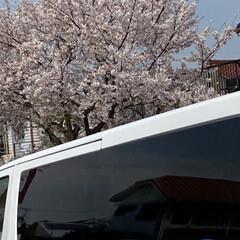 通院/桜🌸 通院の帰り🚲  桜が🌸とても綺麗🌸  今…(7枚目)