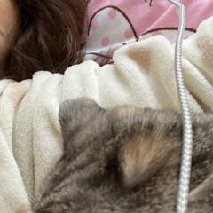 猫神さま/大事な家族/スコティッシュ おはよう御座います❤️  今日ものん君❤…
