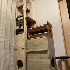ディアウォール/DIY/キャットハウス/キャットタワー/収納/猫トイレ 2匹のトイレと2段ベッドと収納も兼ねたキ…
