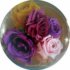 花/長持ち/プリザーブドフラワー/バラ 🔸プリザーブトフラワー🔸  実家の庭の薔…