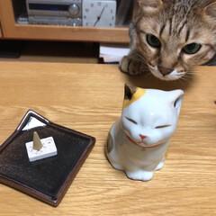 動物モチーフグッズ ネコのお香を狙う猫🐾