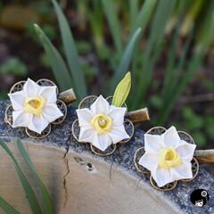 水仙/つまみ細工/あぼかぼ 水仙。 庭に咲いててきれいだったので💕 …