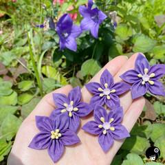 あぼかぼつまみ細工 庭に咲いている桔梗💕  桔梗色の紫がなく…